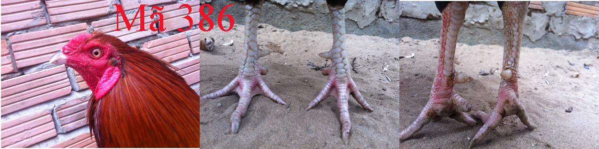 Điều chân trắng 2,5kg