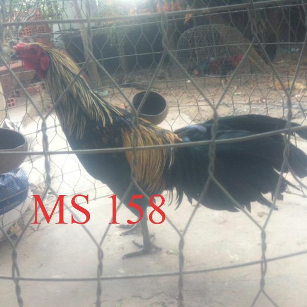 158--chuoi-nha